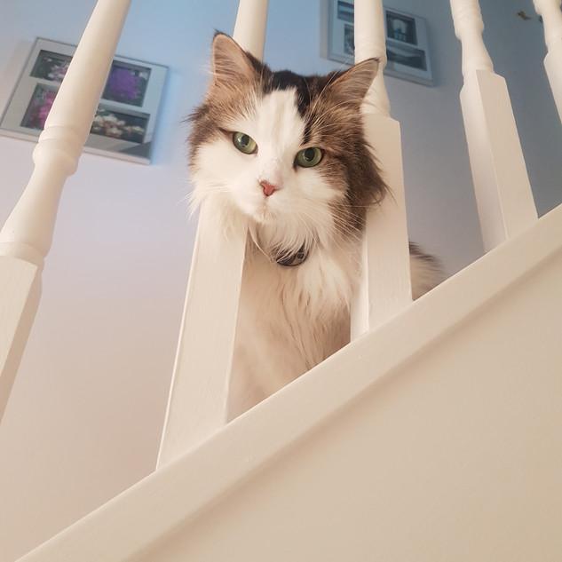 Flora our beautiful cat client