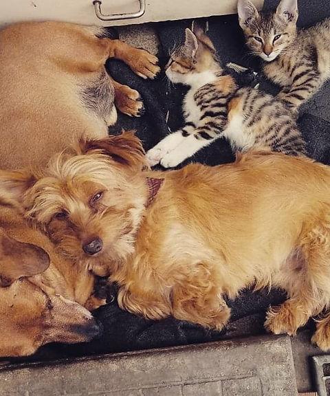 Rudi, cats.jpg