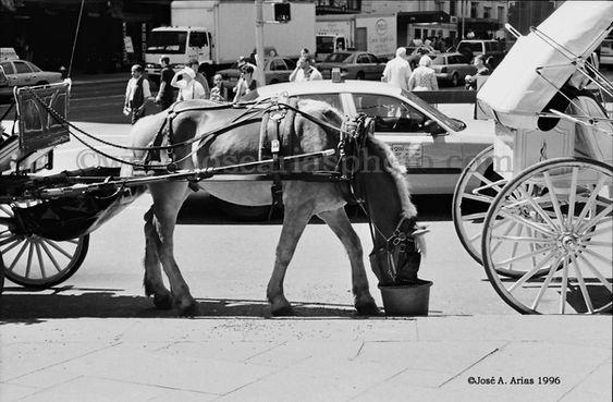 horse having lunch.jpg