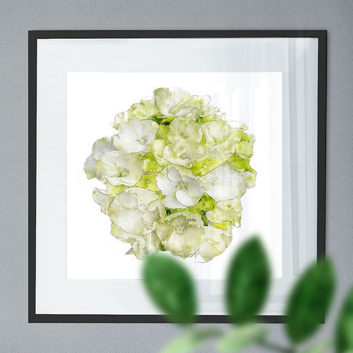 Pen and Watercolour Painting Wall Art Print of a White Hydrangea
