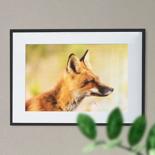 Digital Wall Art Print of Fox Head Blurred Background