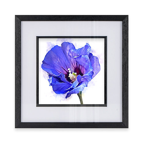 Watercolour Wall Art Print of a Hibiscus Flower