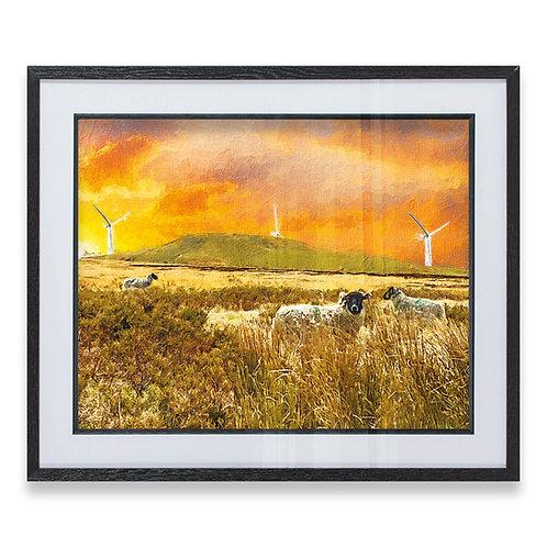 Sheep at Noel Hill Rochdale Rough Brushstroke Effect - Framed Print