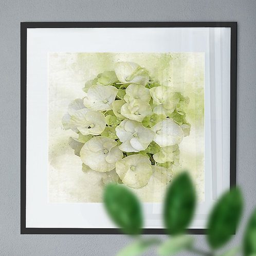Watercolour Painting Wall Art Print of a White Hydrangea