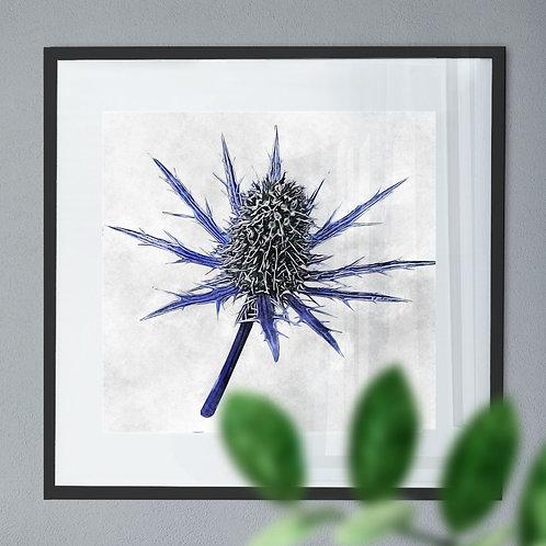 Vintage Watercolour Wall Art Print of a Eryngium Alpinum 'Blue Star' Flower