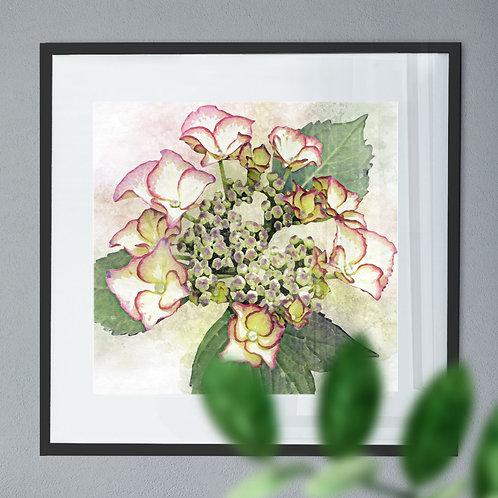 Watercolour Painting - Wall Art Print of a Hydrangea
