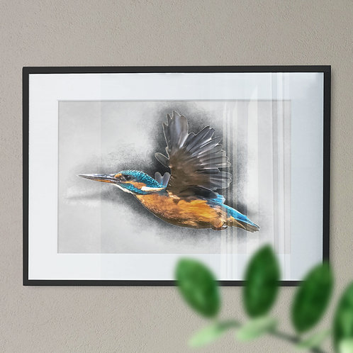 Flying Kingfisher Colour Drawing Wall Art Print (Pencil Drawing)