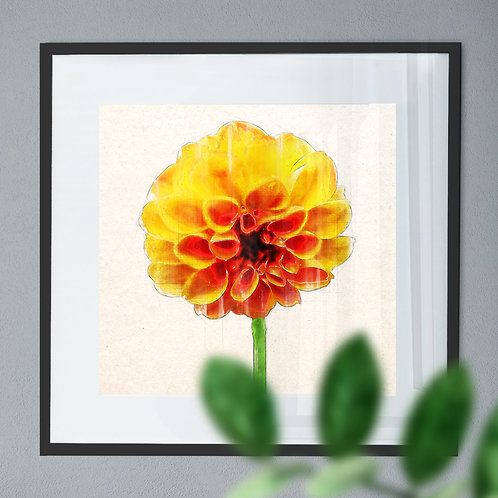 Pencil & Watercolour Wall Art Print of A Yellow Dahlia