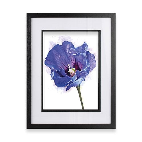 Framed Watercolour Wall Art Print of a Hibiscus Flower