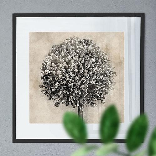 Vintage Wall Art Print of a Allium Flower