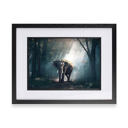 Elephant, Sun Rays through the Trees Photographic Print