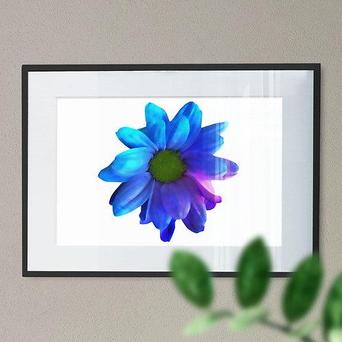 Blue Gerbera Flower with a Digital Effect Wall Art Print