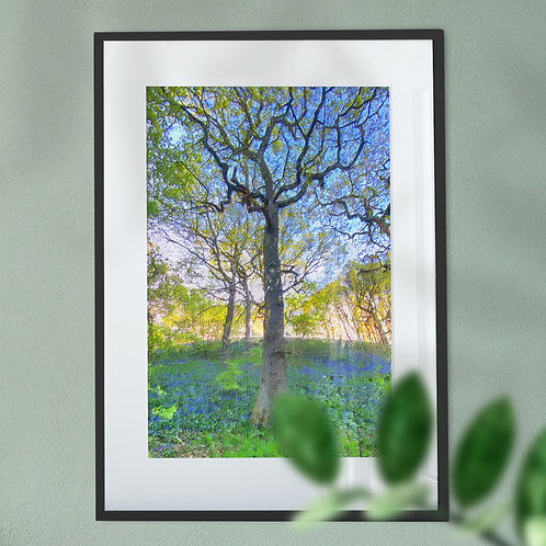 Wall Art Print of Bluebells in the Woods in Oil Painting Effect