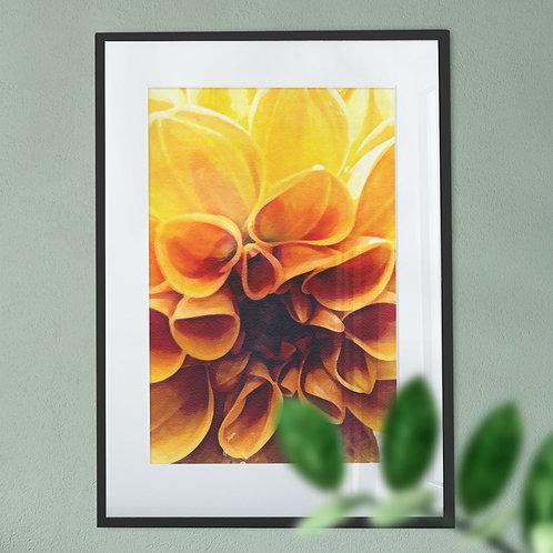 Close up Wall Art Print of a Yellow Dahlia