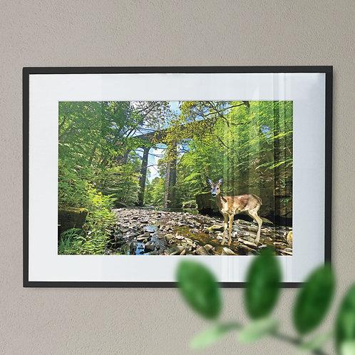 Healey Dell Wall Art Print - Rochdale, With Deer  Digital Effect