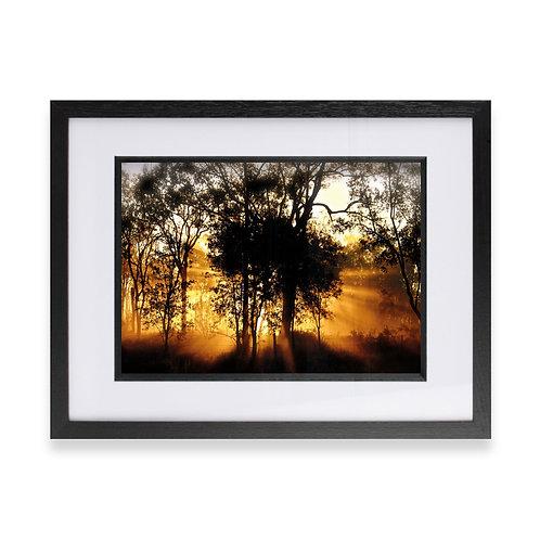 Sun Rays through the Trees Photographic Print