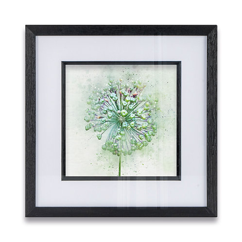 Watercolour Splash Abstract Allium Framed Print