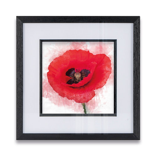 Watercolour Poppy Framed Print