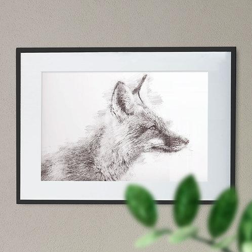 A Soft Pencil Drawing of a Fox Wall Art Print