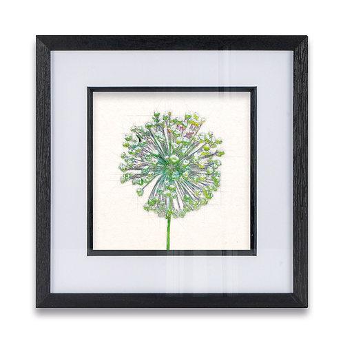 Pen and Watercolour Allium Framed Print