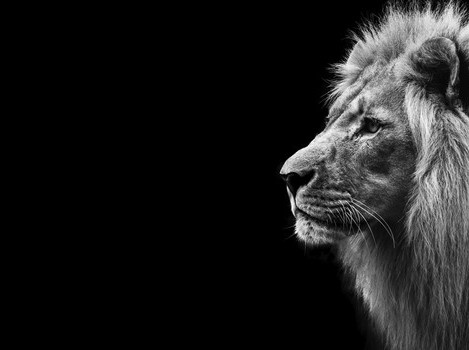 Um Refis para amansar o Leão
