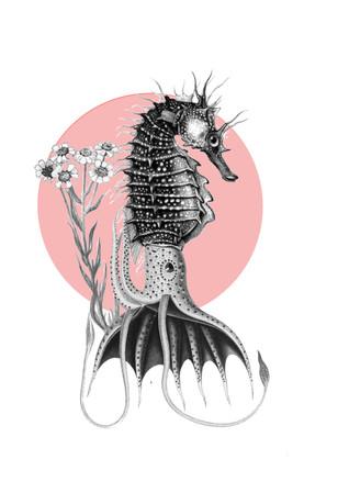 Syngnathidae