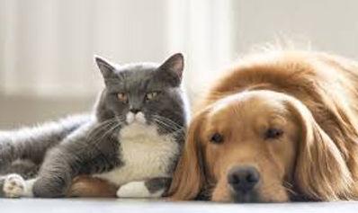 Dog and cat 1.jpg