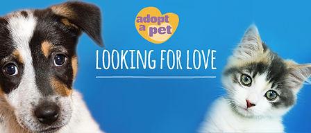 Looking for Love.jpg