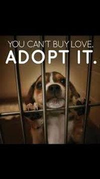 Adopt Don't Shop.jpg