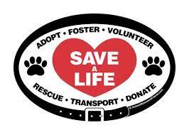 Adopt volunteer.jpg