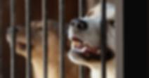 Dog in cage.jpg