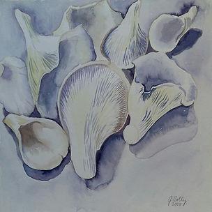 Oyster Mushrooms watercolour 297x297mm