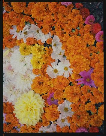 emma fleurs poussin.jpg