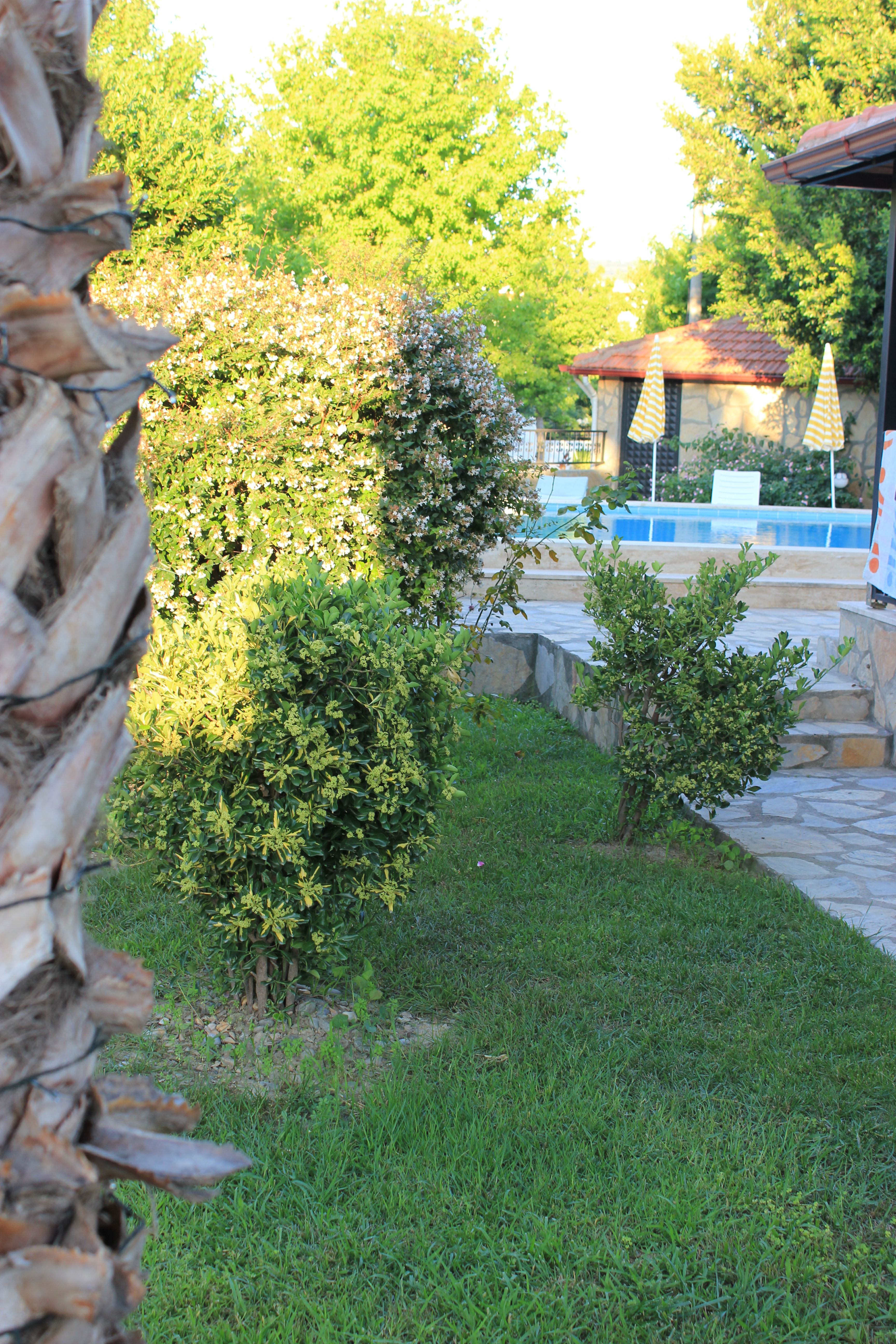 The Dreamturkishvilla Garden