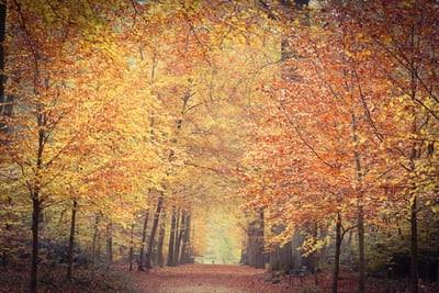 november-nydelse-p-sams-retreatjpg