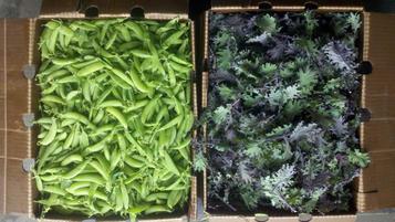 kale and peas.jpg