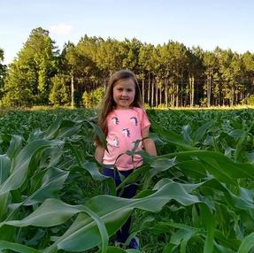 rutledge corn.jpg