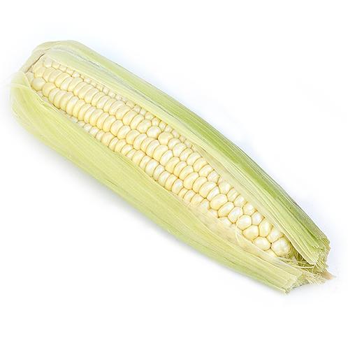 Sweet Corn (6 ears) FL