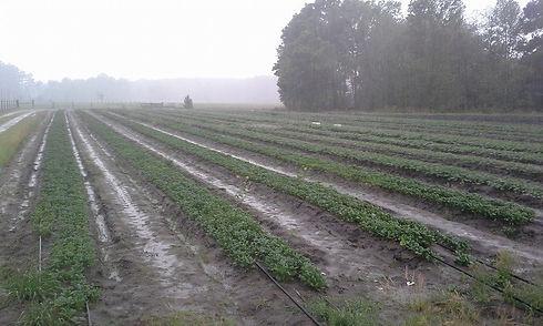 walters farm field.jpg