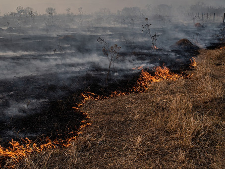 Wildfires May Reheat Lumber Prices!