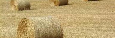 Hay - Medium
