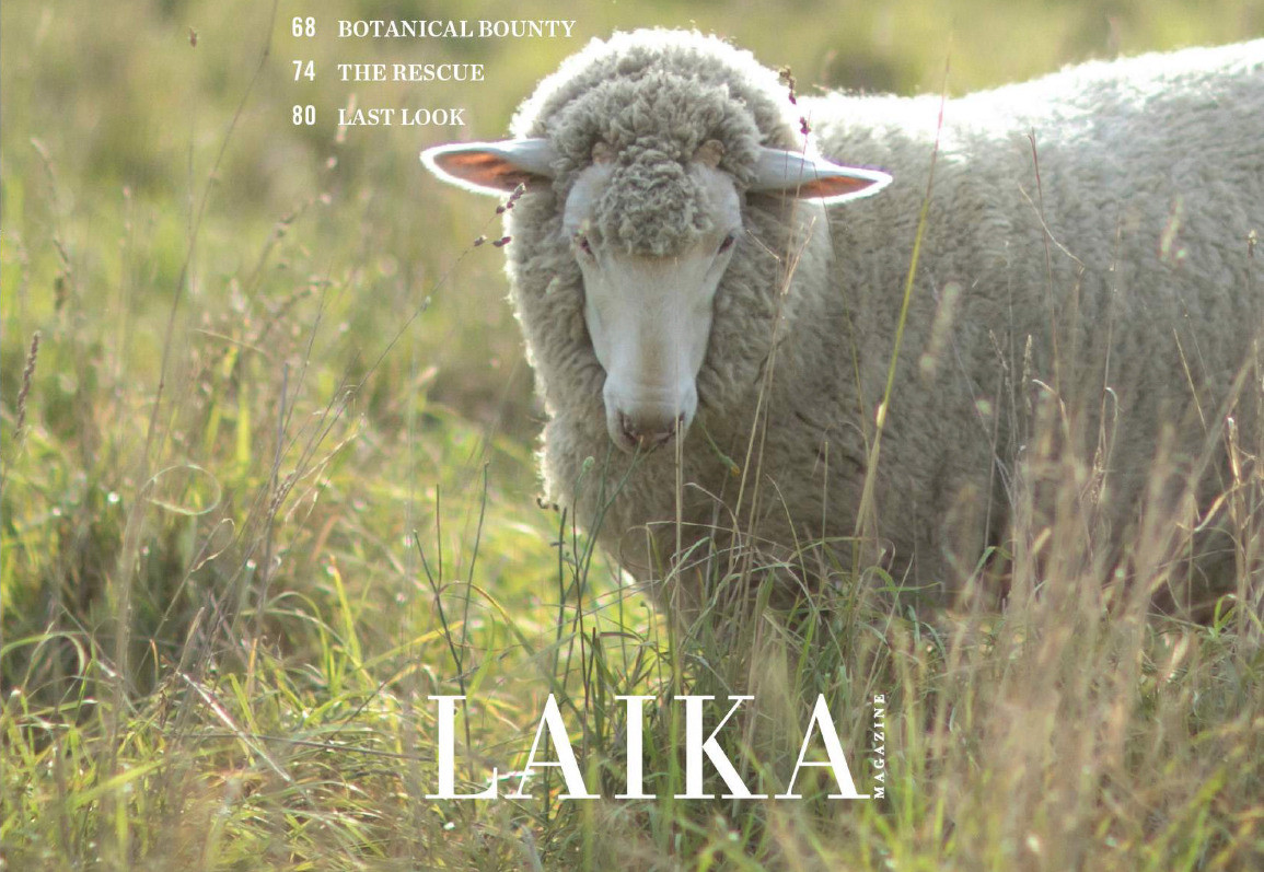 LAIKA Magazine Issue Six-2-LR_edited.jpg
