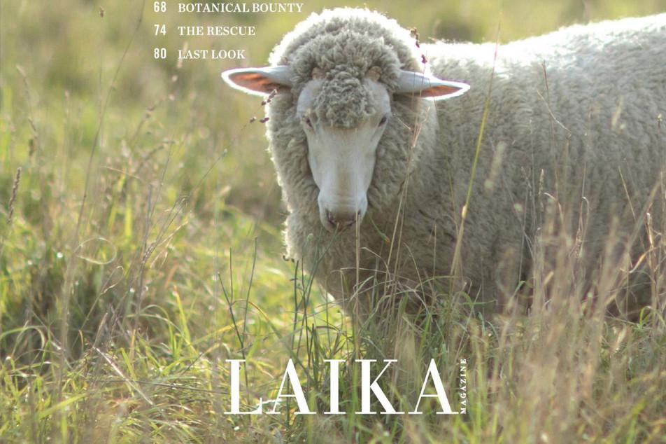 LAIKA Magazine Issue Six-2-LR_edited.jpg