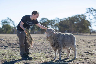 Volunteers with Chris the Sheep