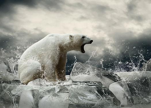 White Polar Bear Hunter on the Ice in wa
