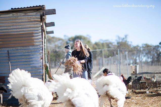 Volunteer at Little Oak Farm Animal Sanctuary
