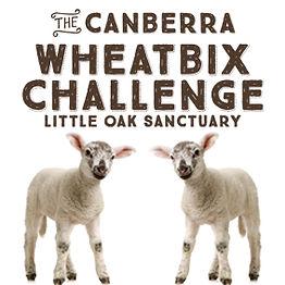 Wheatbix.jpg