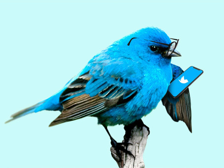 Should you use Twitter for marketing your business?