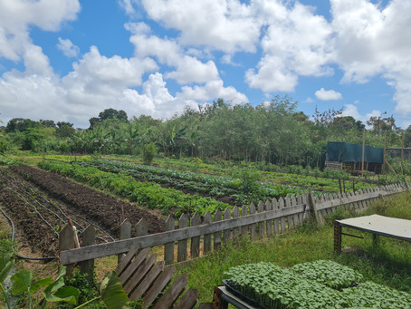 Let's take a walk in Barbados - Haggatt Hall - Harrow Organic Farm