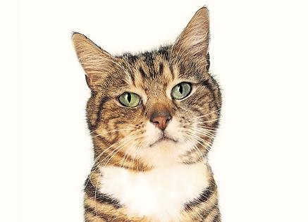 חתול יפה